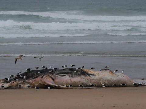 dead whale view