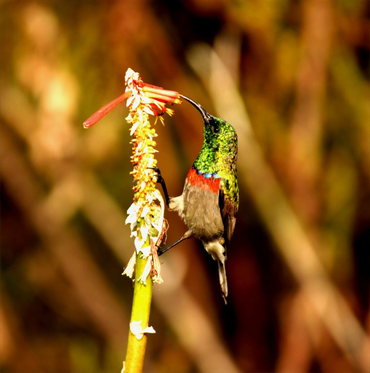 sunbird by Wendy Dewberry