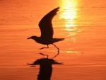 seagull at sunset by Wendy Dewberry