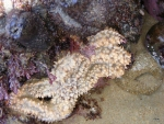 rockpool-starfish-at-noetzie