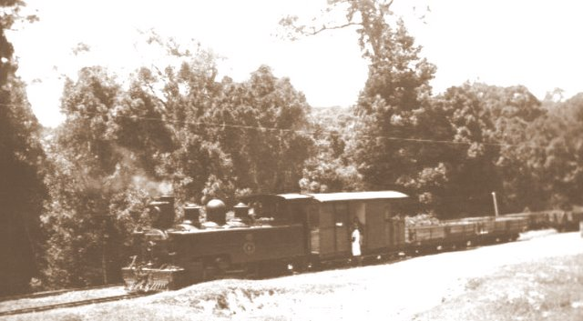 coffee-pot-forest-train-knysna