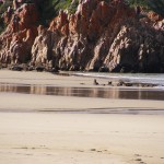 Baboons on the Beach